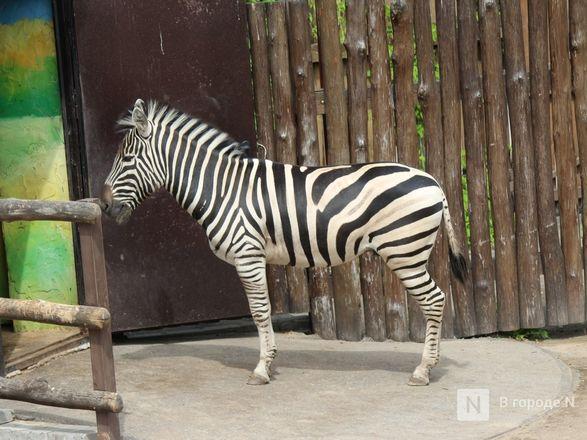 Выжить в пандемию: что происходило в закрытом зоопарке «Лимпопо» - фото 14