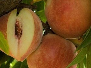 Опасный вредитель обнаружен на привезенных в Дзержинск фруктах