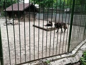Коллектив «Мишутки» после обращения к Путину получил ответ о перспективах зоопарка