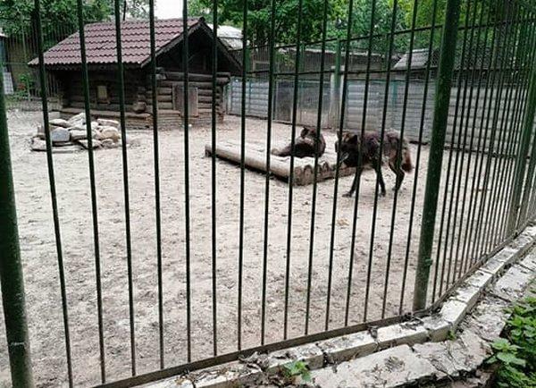 Коллектив «Мишутки» после обращения к Путину получил ответ о перспективах зоопарка - фото 1