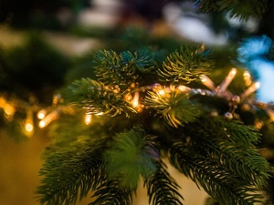 Только 12% нижегородцев купят на новый год живую елку