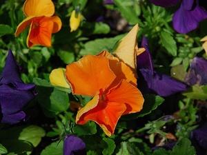 Нижегородскую усадьбу Добролюбовых украсят цветами