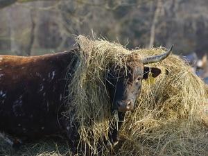 Конфликт скотников в Нижегородской области закончился серьезными травмами