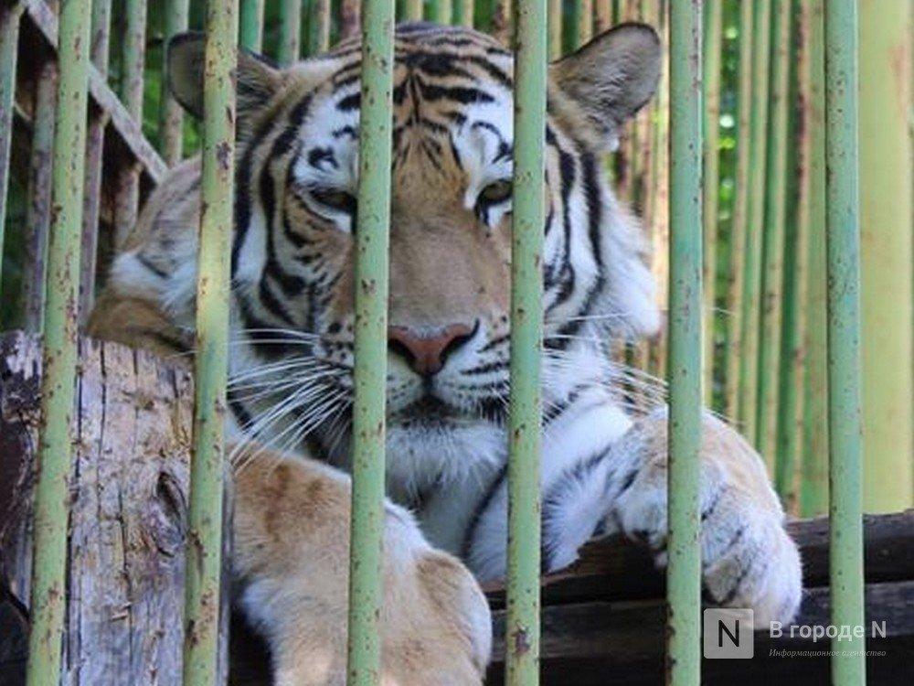 Нижегородский зоопарк «Мишутка» закрыли только на словах - фото 1
