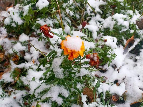 Фотографиями первого снега поделились жители Нижнего Новгорода - фото 3
