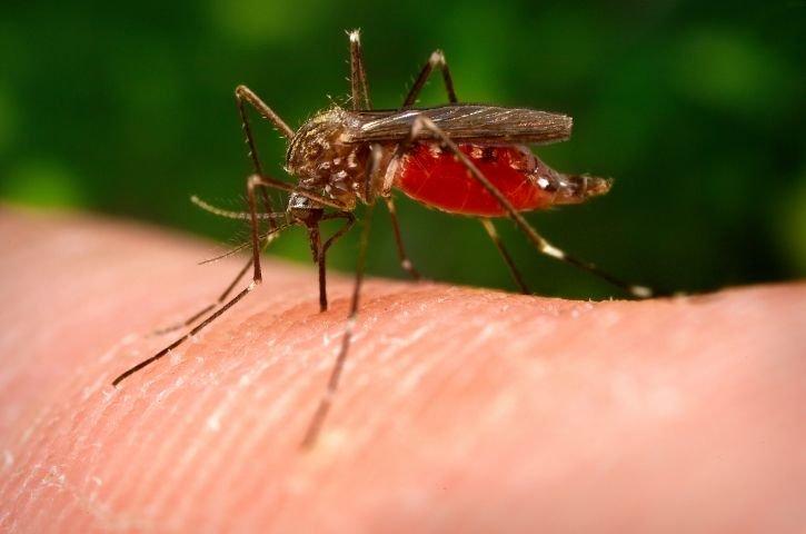 Как легко без покупных спреев избавить тело от укусов комаров - фото 1