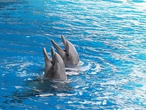Более 44 тысяч человек поддержали петицию против строительства океанариумана Бору