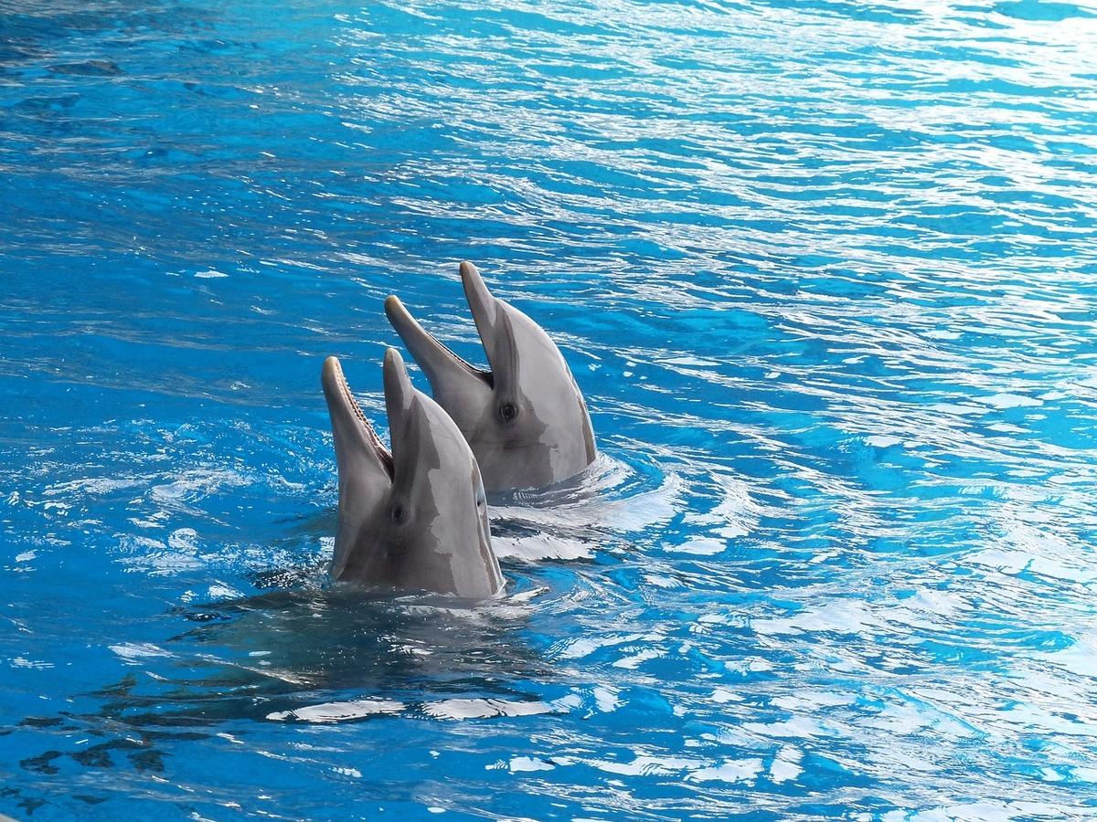 Более 44 тысяч человек поддержали петицию против строительства океанариумана Бору - фото 1