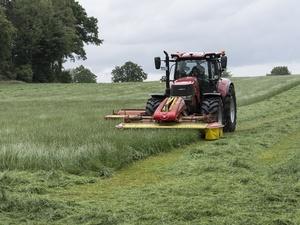 Почти 700 тысяч тонн зерна намолотили в Нижегородской области