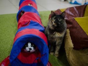 Котокафе закрывается в Нижнем Новгороде и раздает кошек