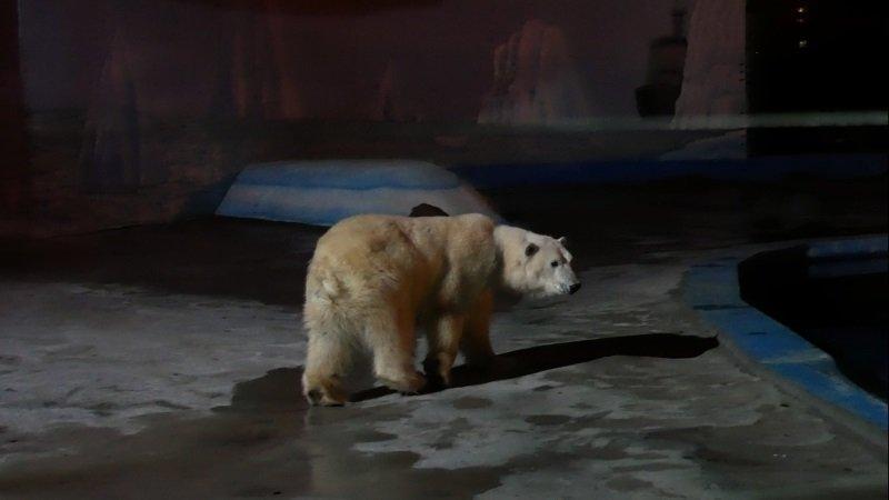 Белая медведица с непростой судьбой поселилась в нижегородском зоопарке - фото 2