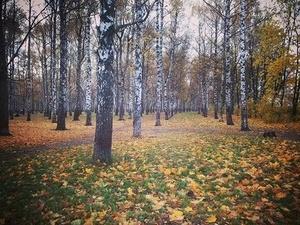 В малых городах Нижегородской области благоустроили парки