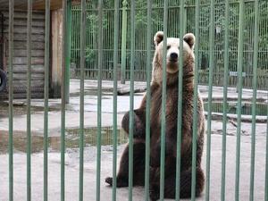 Охота на медведя запрещена в Нижегородской области с 1 декабря