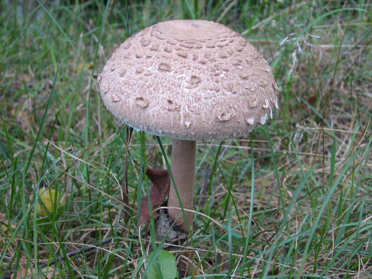 Около 30 нижегородцев ежегодно травятся грибами - фото 1