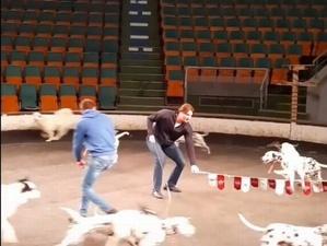 Съемки программы Эдгарда Запашного прошли в нижегородском цирке