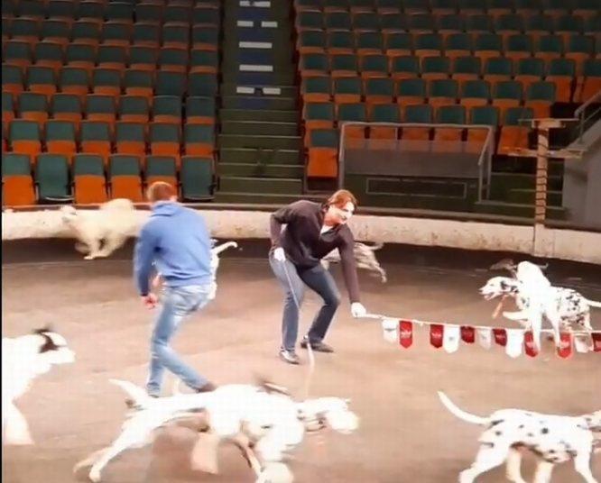 Съемки программы Эдгарда Запашного прошли в нижегородском цирке - фото 1