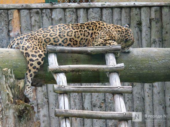 Выжить в пандемию: что происходило в закрытом зоопарке «Лимпопо» - фото 61