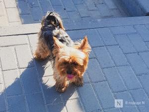 Мошенники выманили у жительницы Арзамаса деньги под предлогом продажи породистого щенка
