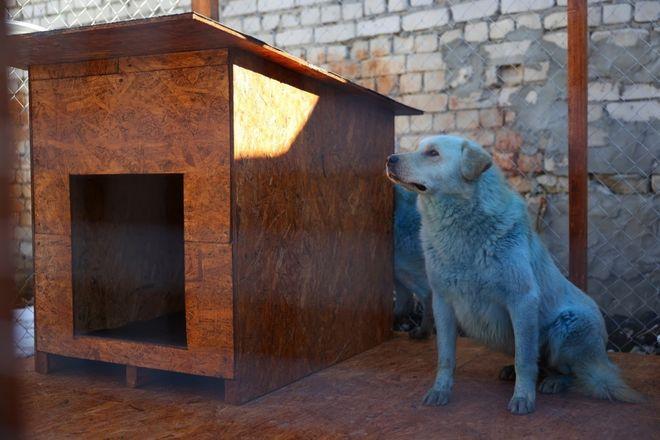 Двух синих собак привезли в муниципальное учреждение Дзержинска - фото 2