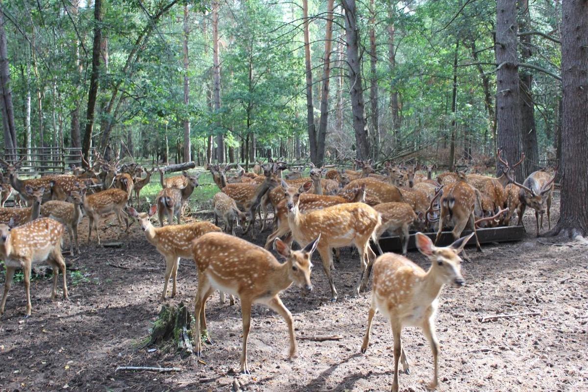 Экотропа для наблюдения за оленями создана в Городецком районе - фото 1